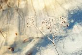 Hoarfrost and snow on the plants in winter forest — Stock Photo