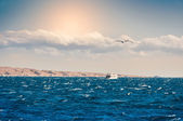 White yacht in the sea  — Stock Photo