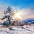 Two beautiful trees in the mountains at sunset — Stock Photo #64419033