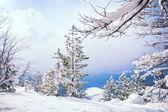 Vackert vinterlandskap — Stockfoto