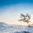 Two beautiful trees in the mountains at sunset — Stock Photo #65753215
