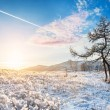 Two beautiful trees in the mountains at sunset — Stock Photo #66453439