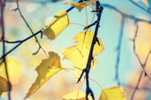 Yellow autumn leaves against the blue sky — Stock Photo