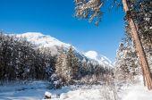 Paesaggio invernale con grandi pini e vista montagna — Foto Stock