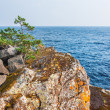 Lone pine tree on a cliff by the sea. — Stock Photo #70165829