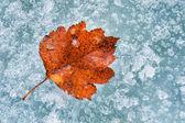 Buz üzerinde kırmızı sonbahar yaprak — Stok fotoğraf