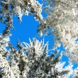 Winter forest with snow-covered pines — Stock Photo #78944976