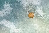 Autumn leaf on the ice. — Stock Photo