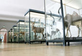 The Senckenberg Museum — Stock Photo