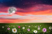 Kwiat pole w nocy. — Zdjęcie stockowe