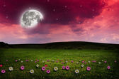 Gece çiçek alanı. — Stok fotoğraf