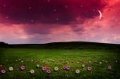 Flower field in the night. — Stock Photo