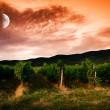 Night sky over grape field, view — Stock Photo #54051393
