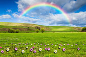 Beautiful field with rainbow at background — Стоковое фото