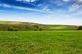 ふわふわ白い雲と草原で晴れた日 — ストック写真