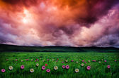 Flower field at sunrise or sunset — Stock fotografie