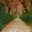 Old stone Path in old park — Stock Photo #78108966