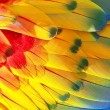 Parrot feathers, red, yellow and blue exotic texture — Stok fotoğraf #56634003
