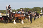 Heavy horse carts — Stock Photo