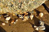 Group of sea shells on beach — Stock Photo