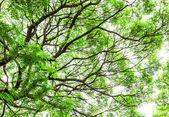 Tree branches  and green leaves — Stock Photo