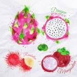 Exotic fruit watercolor dragon fruit, rambutan, mangosteen — Stock Vector #58582943