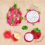 Exotic fruit watercolor dragon fruit, rambutan, mangosteen in kraft — Stock Vector #58582985