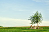 Ukrainian wooden hives in a field under a tree — Stock Photo