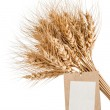 Sheaf of wheat with a blank price tag on a white background — Stock Photo #67732759