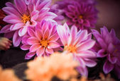 Colorful flowers — Stockfoto