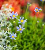 Colorful flowers closeup — Stock Photo