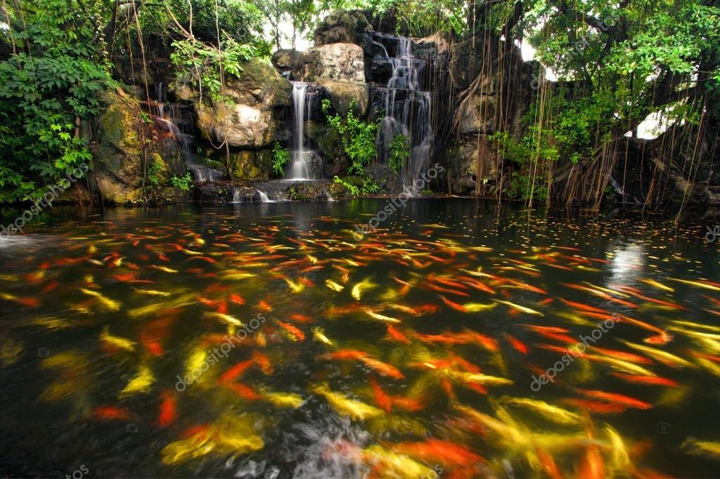 Pez koi en estanque en el jard n con cascada foto de for Cascada estanque prefabricado