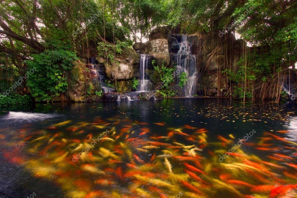 Koi vissen in de vijver bij de tuin met een waterval for Vissen vijver