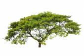 Träd isolerad på vit bakgrund — Stockfoto