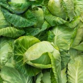 Fresh cabbage in the vegetable market — ストック写真