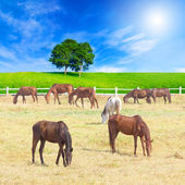 Group of horses on a meadow in farm with beautiful landscape — Stock Photo