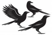 鳥カラス — ストックベクタ
