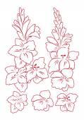 Gladiolus flower illustration — Stock Vector
