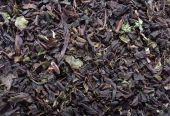Koporye Tea closeup — Stock Photo