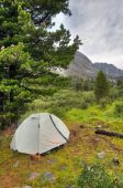 Double lightweight sports tent under a large Siberian pine  — Foto de Stock