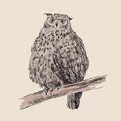 Sketch of owl — Stock Vector