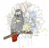 Papağan — Stok Vektör