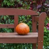 Pumpkin on the bench — Stockfoto