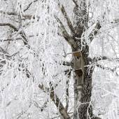 Birdhouse on snowy tree — Stock Photo