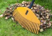 Pile of leaves with rake — Stock Photo