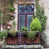 Old balcony overgrown with flowers — Stock Photo