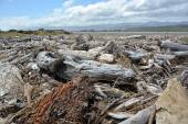 Drift wood piled up on Karamea Beach, New Zealand. — Stock Photo