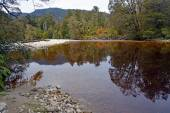 The Oparara River Near Karamea, New Zealand — Stockfoto