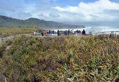 Tourists Taking Photos at Punakaiki Rocks, West Coast New Zealan — Stock Photo