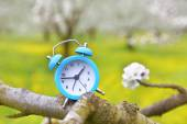 An alarm clock on a branch of a tree, nature background — Stock Photo